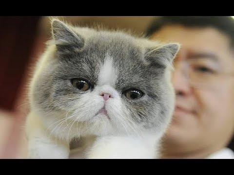 BEST Cute Cat & Dog Vine Compilation 2019 | Cute Pet Vine Videos #2
