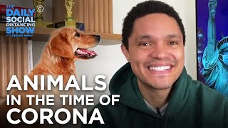Animals in the Time of Coronavirus | The Daily Social Distancing Show