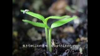 「Miyabi」こと竹内まりやが作り、茉奈佳奈が歌った「いのちの歌」の児...