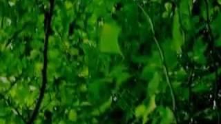 erica - 最後の恋