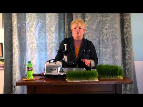 Day 14! Wheatgrass Diary  Helpful Hints About Mold 001