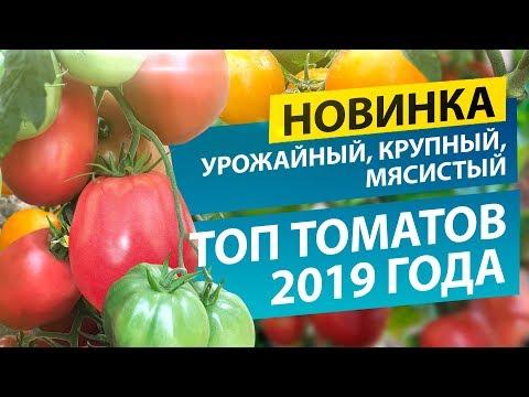 Топ томатов-2019: НОВИНКА, УРОЖАЙНЫЙ, КРУПНЫЙ И МЯСИСТЫЙ