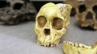 Researchers discover new ancient ancestor