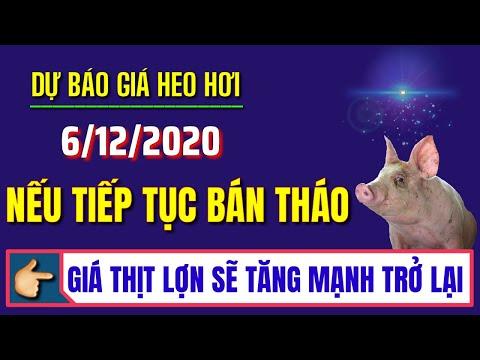 Dự báo giá heo hơi ngày 6/12/2020 | Nếu tiếp tục bán tháo: Giá lợn hơi sẽ tăng mạnh trở lại