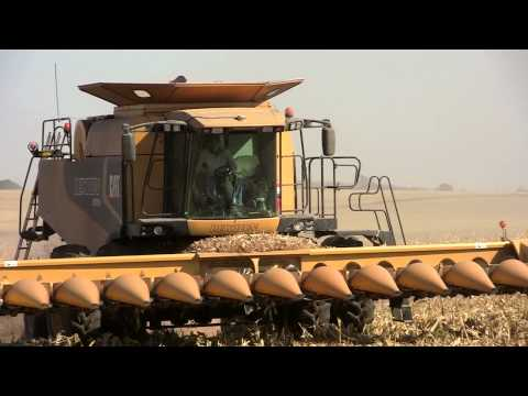 Gensler Farms, Lexion Combines Near Rochelle, Illinois on 10-22-2011