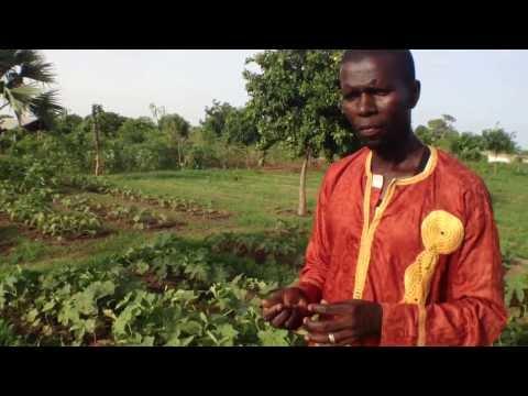 African Organic  Market Gardener