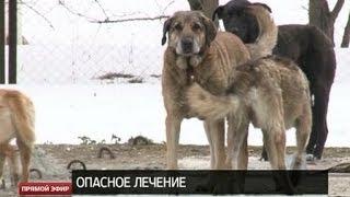 Стая бродячих собак держит в страхе целую больницу в Екатеринбурге