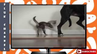 WOW Catdance Finalist 2014  Ricky