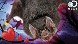 Why You Shouldn't Be Scared Of Vampire Bats