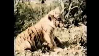 Comme des bêtes (1988 color - animal sex documentary)