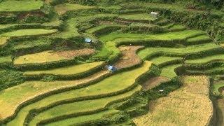 【World Heritage】Banaue Rice Terraces   世界遺産:バナウェ ライステラス 棚田郡