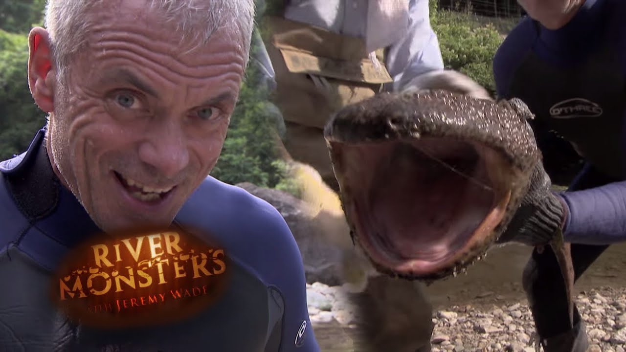 catching a giant japanese salamander by hand river monsters youtube