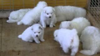 撮影日2014年5月15日 アライ畜犬牧場 www.araichikuken.com.