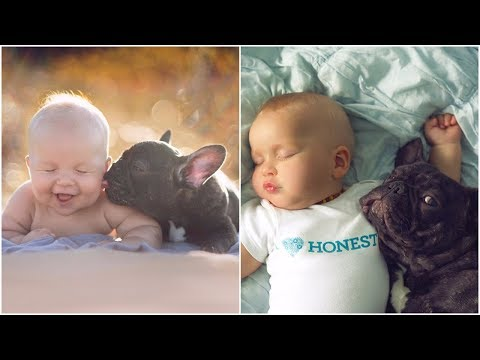 Bull dog & baby born at same day both think they're the same species