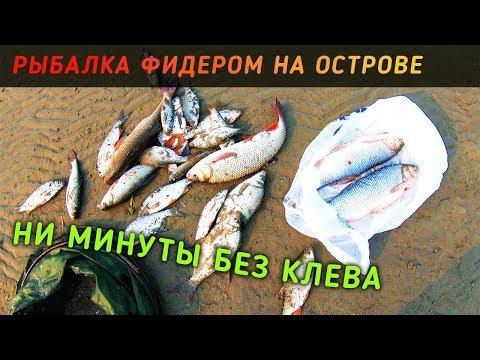 Рыбалка на острове в Новосибирске. Килограммовые язи на течении.