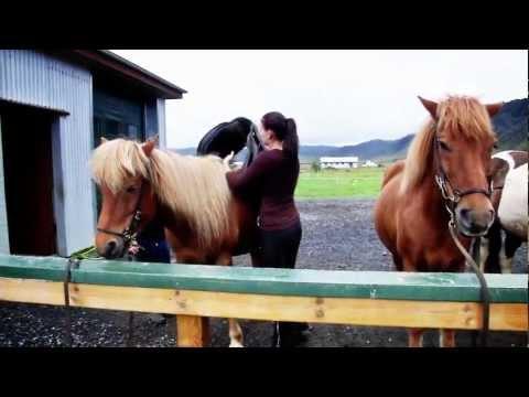 Horse rental Sólhestar