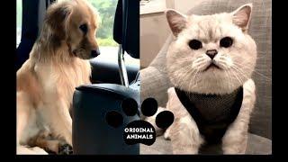 Original Animals #14. CUTE AND FUNNY ANIMALS VIDEO/ МИЛЫЕ И СМЕШНЫЕ ЖИВОТНЫЕ.