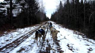 Muddy Paws Sled Dog Kennel - Jefferson, NH