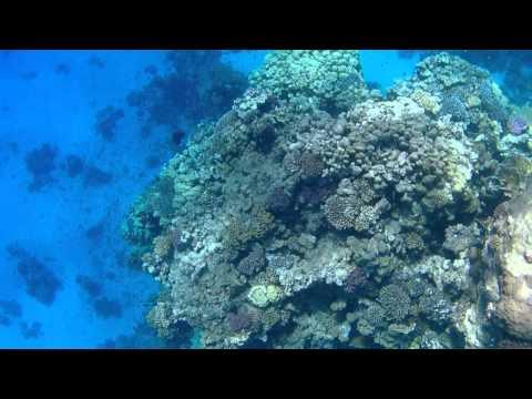 Off shore reef dive 2. Marsa Alam Egypt.