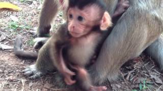 Emma And Grace Life 8 - Baby Monkey Emma Want To See Her On Ipad thumbnail