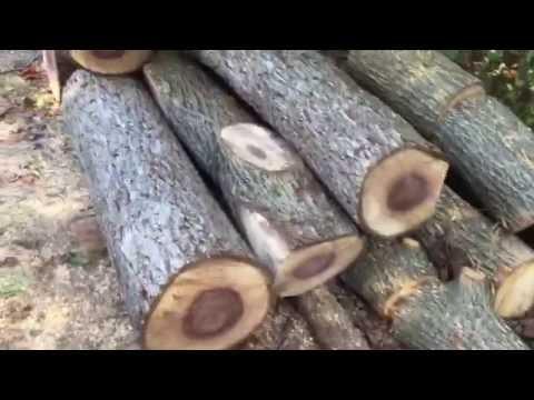 Small Haul of Black Walnut Wood