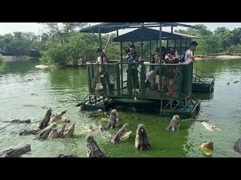 Most DANGEROUS Tourist Locations With Dangerous Animals!
