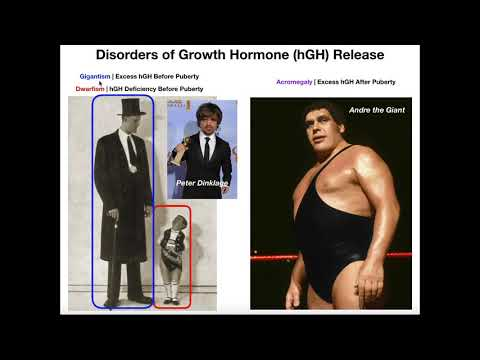 Disorders Of Growth Hormone Release [Excess And Deficiency]