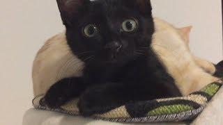 押し潰された子猫 押しだしましょう子 検索動画 18