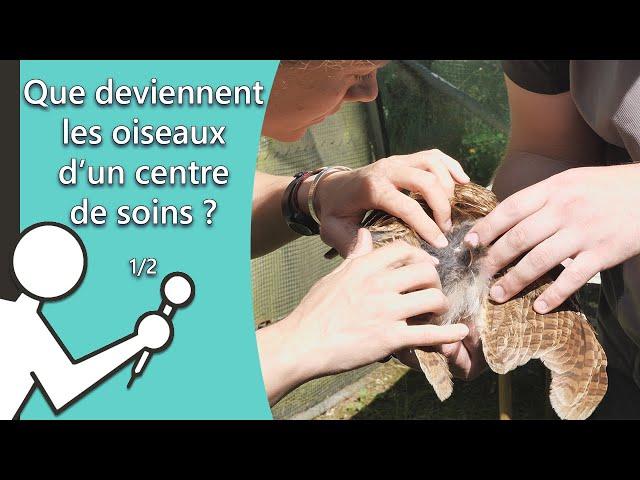 Que deviennent les oiseaux d'un centre de soins ? Les Secouristes de la faune sauvage #3 [1/2]