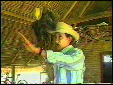 Juan Farfan - Mi Viejo llano inmortal. Audio Remasterizado
