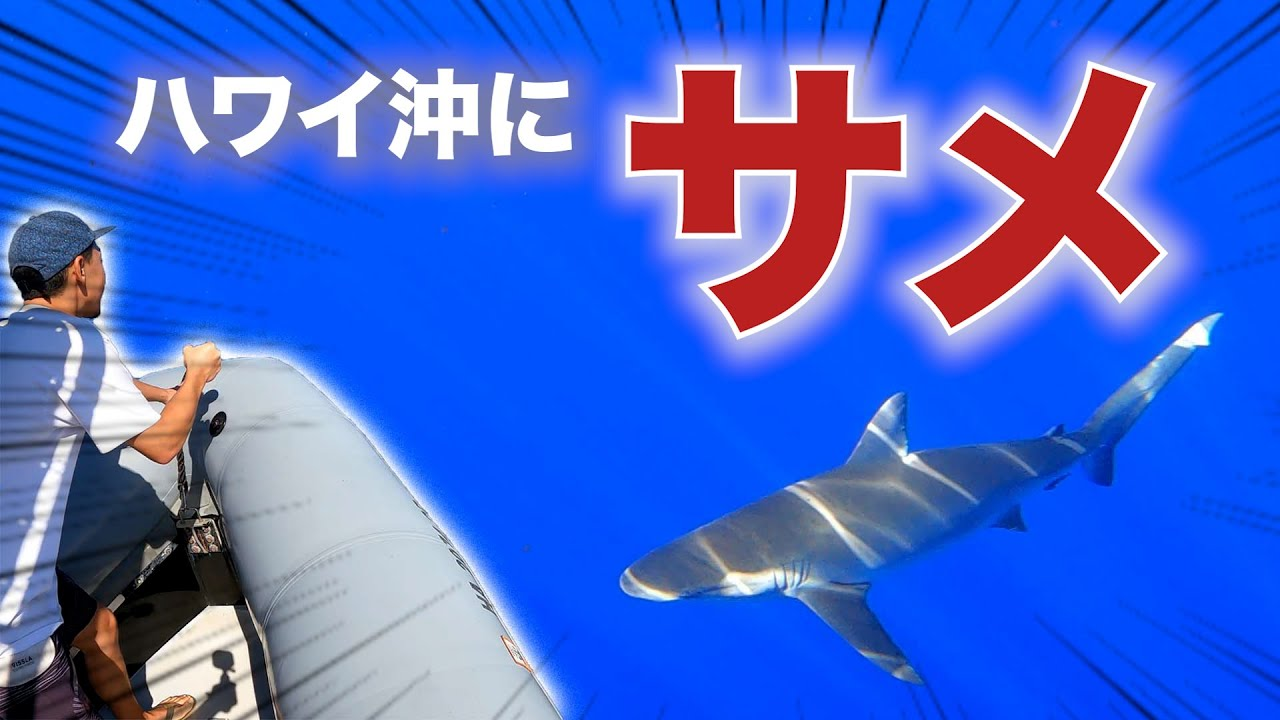 【恐怖】ハワイ沖でサメの群れにボート囲まれた