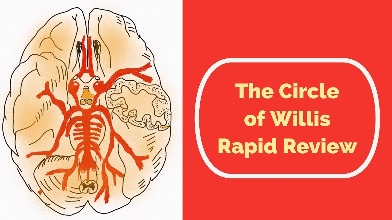 The Circle Of Willis Rapid Review Youtube