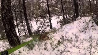 Border Terrier ,varri, På Ferskspor 23. Des 2013 I Snø.