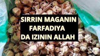 SIRRIN MAGANIN FARFADIYA DA IZININ ALLAH
