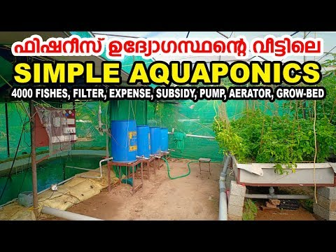 Fisheries Officer Maintaining A Simple Aquaponics System