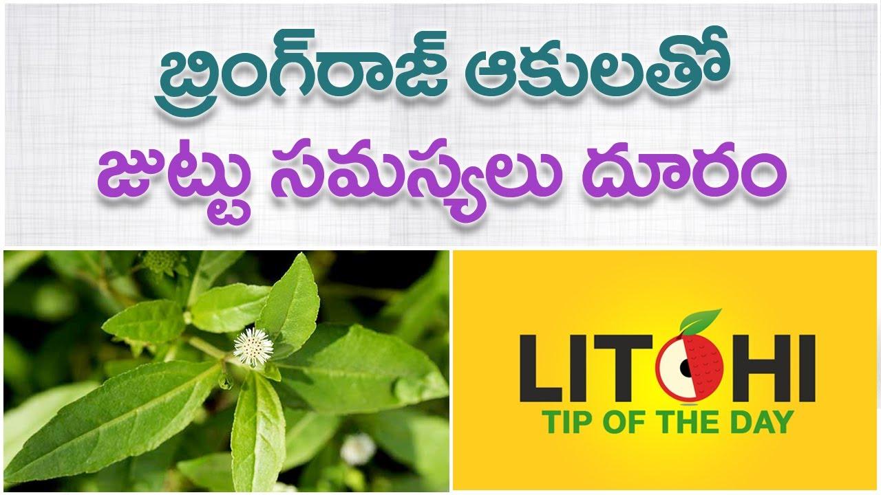 Bhringraj Leaves For Hair Guntagalagara Aku Hair Regrowth Tips In