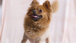 Scrub-A-Dub-Pup