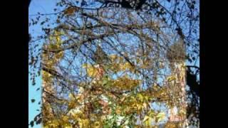 видео храм скоропослушницы на октябрьском поле