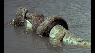 What You Didn't Know About The World's BIGGEST Snake!