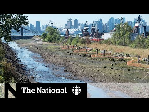 CBC News: The National: Using nature to defend against floods