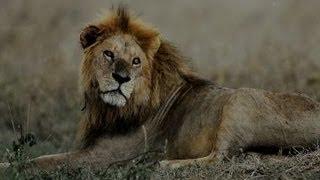 Tea Party Congressman Ate a Lion