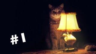видео забавные и смешные истории из жизни