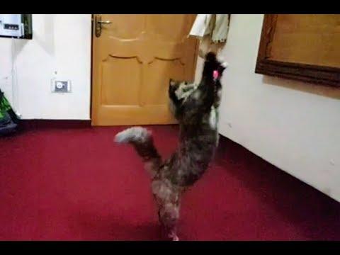 My Cat in a mood!
