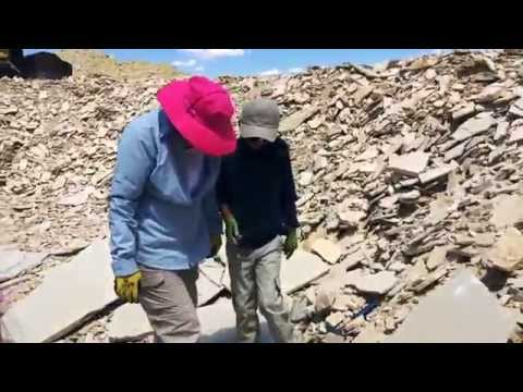 Fossil Hunting In The Warfield Quarry