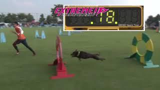 愛犬と一緒に楽しむドッグスポーツ「エクストリーム」のプロモーション...