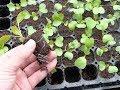 Vi sinh vật và câu chuyện cải tạo đất trồng