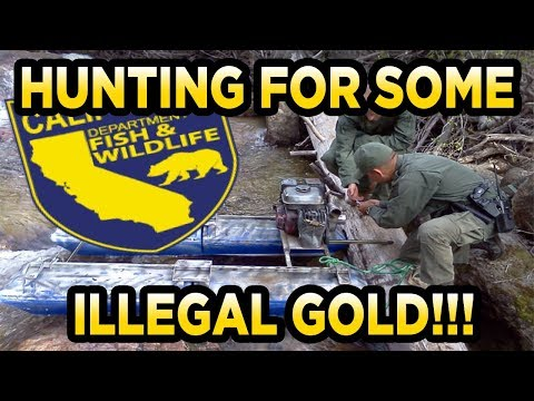 Jimbos Gold 1lb Illegal California Dredge Concentrates Gold Paydirt Review (JimbosGold.com)