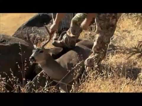 Hunting blacktail deer in northern california by guns for Guns fishing other stuff