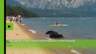 В Калифорнии медведи искупались вместе с отдыхающими(Отдыхающих на озере Тахо в США не смутило появление медведицы с медвежатами. Люди и животные искупались..., 2016-08-04T15:03:28.000Z)
