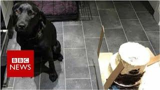 Dog eats wedding cake on morning of couple